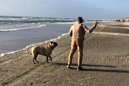 Strandregels honden en paarden